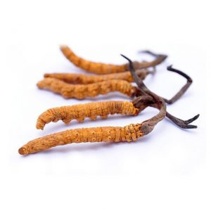 Metagenics Adreset contains Cordyceps Mycelium
